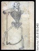 Anatomical illustration. Редакционное фото, агентство World History Archive / Фотобанк Лори