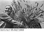 Krasnodar (vicinity), USSR (Union of Soviet Socialist Republics). Woman collective farmer with newly harvested wheat. between 1930 and 1940. Редакционное фото, агентство World History Archive / Фотобанк Лори