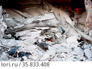 Paper burning in recycle center. Стоковое фото, фотограф Zoonar.com/Oliver Sved / age Fotostock / Фотобанк Лори