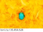 Blaues Ei zu Ostern in einem Nest aus vielen gelben Federn. Стоковое фото, фотограф Zoonar.com/Robert Kneschke / age Fotostock / Фотобанк Лори