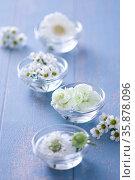 Flowers. Стоковое фото, агентство Ingram Publishing / Фотобанк Лори