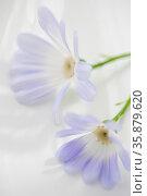Purple flowers. Стоковое фото, агентство Ingram Publishing / Фотобанк Лори