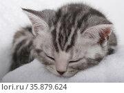 Cat napping. Стоковое фото, агентство Ingram Publishing / Фотобанк Лори