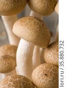 Shimeji mushroom. Стоковое фото, агентство Ingram Publishing / Фотобанк Лори