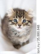Kitty. Стоковое фото, агентство Ingram Publishing / Фотобанк Лори