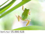 Frog. Стоковое фото, агентство Ingram Publishing / Фотобанк Лори