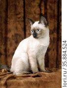 Cats and Pet Animal. Стоковое фото, агентство Ingram Publishing / Фотобанк Лори