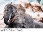 Afrikanischer Elefant wirft Sand, South Luangwa Nationalpark, Sambia... Стоковое фото, фотограф Zoonar.com/WIBKE WOYKE / age Fotostock / Фотобанк Лори