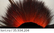 Traditional hairpiece made from dyed porcupine hair and e. Редакционное фото, агентство World History Archive / Фотобанк Лори
