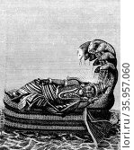 Engraving depicting Vishnu sleeping upon the coils of the serpent of cosmic time (2016 год). Редакционное фото, агентство World History Archive / Фотобанк Лори