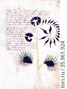 The Voynich manuscript. illustrated codex. Редакционное фото, агентство World History Archive / Фотобанк Лори