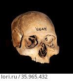 Ancient Egyptian Skull 600-300 BC, 26th Dynasty or later. Редакционное фото, агентство World History Archive / Фотобанк Лори