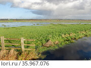 View of partially flooded pastureland on Tealham Moor, after a period of heavy rain, Somerset Levels, UK, December 2020. Стоковое фото, фотограф Nick Upton / Nature Picture Library / Фотобанк Лори