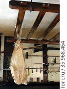 dried fish hang rom the ceiling of a 17th century Dutch kitchen. Редакционное фото, агентство World History Archive / Фотобанк Лори