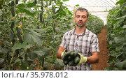 Portrait of successful proud farmer engaged in organic vegetables cultivation in greenhouse, showing harvest of cucumbers. Стоковое видео, видеограф Яков Филимонов / Фотобанк Лори