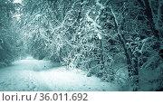 Заснеженный пейзаж в лесу крупным планом. Стоковое фото, фотограф Андрей Атрощенко / Фотобанк Лори