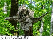 Россия, Сочи, причудливая коряга в горном лесу. Стоковое фото, фотограф glokaya_kuzdra / Фотобанк Лори
