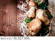 Pictured mushrooms(Boletus edulis,Porcini) - king of pore fungi,placed... Стоковое фото, фотограф Zoonar.com/Roberto Binetti / age Fotostock / Фотобанк Лори