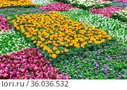 Flowerbed with different colorful flowers on city street in summer. Стоковое фото, фотограф Zoonar.com/Alexander Blinov / easy Fotostock / Фотобанк Лори