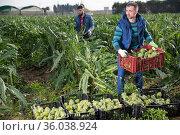 Man carrying crates with artichokes. Стоковое фото, фотограф Яков Филимонов / Фотобанк Лори