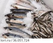 Mackerel and capelin on an ice for sale. Стоковое фото, фотограф Володина Ольга / Фотобанк Лори