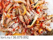 Raw Norway lobster on ice. Стоковое фото, фотограф Яков Филимонов / Фотобанк Лори