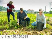 People gathering crop of potatoes. Стоковое фото, фотограф Яков Филимонов / Фотобанк Лори