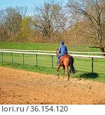 Pferd und Reiterin beim Training auf einer Galopprennbahn. Стоковое фото, фотограф Zoonar.com/Heiko Kueverling / easy Fotostock / Фотобанк Лори