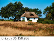 Idyllic countryside landscape with reed house on isle of Hiddensee. Стоковое фото, фотограф Zoonar.com/Stefan Dinse / easy Fotostock / Фотобанк Лори