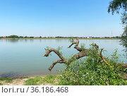 Поваленное дерево на берегу реки Кубани, Краснодар. Стоковое фото, фотограф Мария Кылосова / Фотобанк Лори
