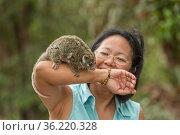 Stella Freund with a baby Green ringtail possum (Pseudochirops archeri... Стоковое фото, фотограф Jurgen Freund / Nature Picture Library / Фотобанк Лори
