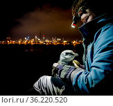 Earthcare St Kilda penguin research volunteer holding Little penguin (Eudyptula minor) after retrieving it from burrow to check for microchip and determine... Стоковое фото, фотограф Doug Gimesy / Nature Picture Library / Фотобанк Лори