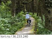A boardwalk near a beach in Pacific Rim National Park, near Tofino... Редакционное фото, фотограф Douglas Williams / age Fotostock / Фотобанк Лори