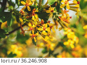 Spring background art with yellow blossom. Beautiful nature scene... Стоковое фото, фотограф Zoonar.com/Viktoria Kondysenko / easy Fotostock / Фотобанк Лори