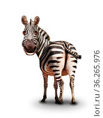 Funny smiling zebra looking back illustration like. Стоковое фото, фотограф Сергей Новиков / Фотобанк Лори