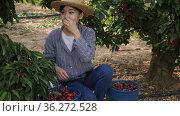 Asian girl is harvesting and eating cherries on the plantation. Стоковое видео, видеограф Яков Филимонов / Фотобанк Лори