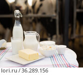 jug of milk, bottle of kefir, cottage cheese, cream and yogurt in bowl, cheese, butter on table in cowshed. Стоковое фото, фотограф Татьяна Яцевич / Фотобанк Лори
