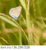 Маленькая бабочка сидит среди травы. Стоковое фото, фотограф Игорь Низов / Фотобанк Лори