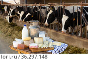 Dairy farm - table with dairy products in background of cows in stall. Стоковое фото, фотограф Яков Филимонов / Фотобанк Лори
