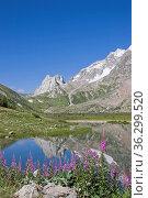 Waldweidenröschen vor einem kleinen Tümpel im Val Veny südlich des... Стоковое фото, фотограф Zoonar.com/Christa Eder / easy Fotostock / Фотобанк Лори