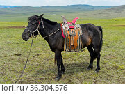 Aufgezäumtes Pferd eines Nomaden mit traditionellem Sattel in der... Стоковое фото, фотограф Zoonar.com/Georg / age Fotostock / Фотобанк Лори