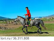 Junge reitet auf einem Pferd durch die Steppe, Orchon-Tal, Khangai... Стоковое фото, фотограф Zoonar.com/Georg / age Fotostock / Фотобанк Лори