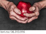 Haende einer alten Frau halten einen roten Apfel vor schwarzem Hintergrund... Стоковое фото, фотограф Zoonar.com/Uwe Bauch / easy Fotostock / Фотобанк Лори