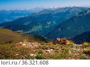 Marmot in the Dolomites. Стоковое фото, фотограф Zoonar.com/Bernhard Klar / easy Fotostock / Фотобанк Лори