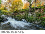 Shimna River Tollymore Forest, Shimna River Tollymore Forest Newcastle, County Down, Northern Ireland. Стоковое фото, фотограф Robert  Thompson / Nature Picture Library / Фотобанк Лори