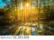 Sunny Day In Autumn Sunny Forest Woods and Wild Bog. Nature Woods... Стоковое фото, фотограф Ryhor Bruyeu / easy Fotostock / Фотобанк Лори