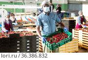 People with crates in cherry warehouse with mask. Стоковое фото, фотограф Яков Филимонов / Фотобанк Лори