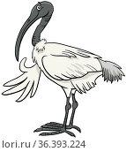 Cartoon illustration of funny ibis bird animal character. Стоковое фото, фотограф Zoonar.com/Igor Zakowski / easy Fotostock / Фотобанк Лори