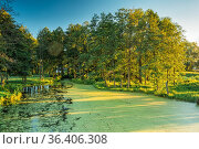 Landscape Of Summer Sunny Forest Woods And Wild Bog With Duckweed... Стоковое фото, фотограф Ryhor Bruyeu / easy Fotostock / Фотобанк Лори
