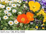Small and colorful flowers in a garden at Soul's downtown, South ... Стоковое фото, фотограф Marquicio Pagola / age Fotostock / Фотобанк Лори